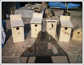 Bird Houses and Feeder Construction Outagamie/Winnebago Wisconsin